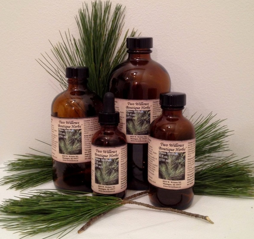 White Pine Needle Extract Tincture
